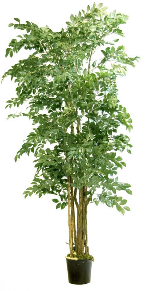 Dekoratiivpuu